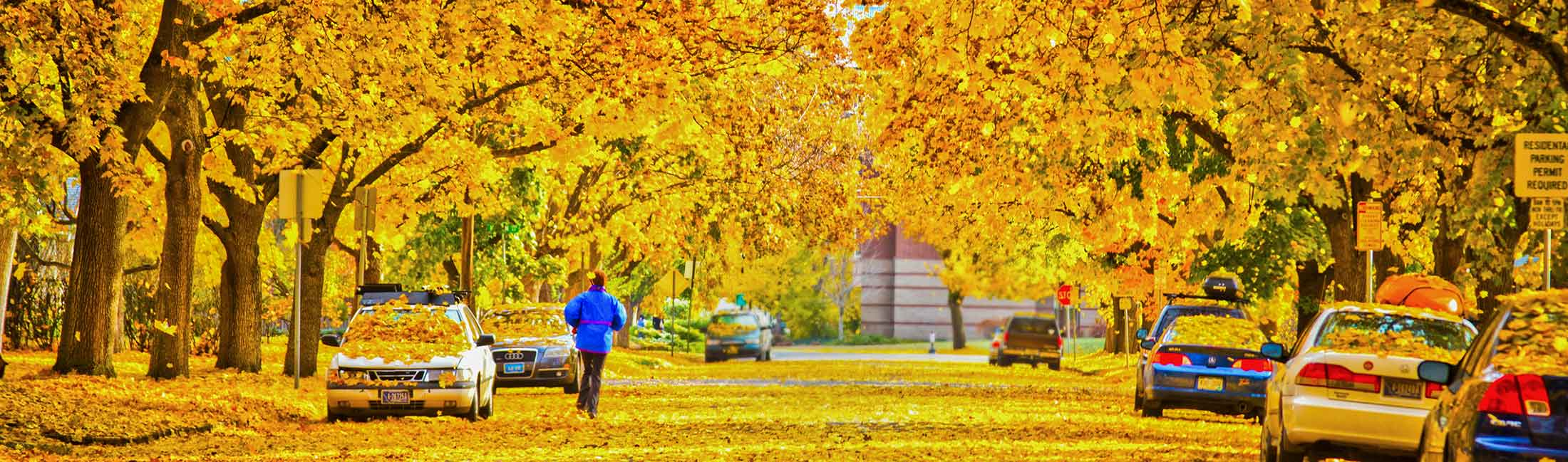 Fall foliage in the Missoula University district